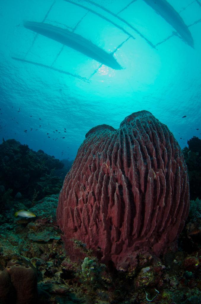 Giant Barrel Sponge & Bangkas