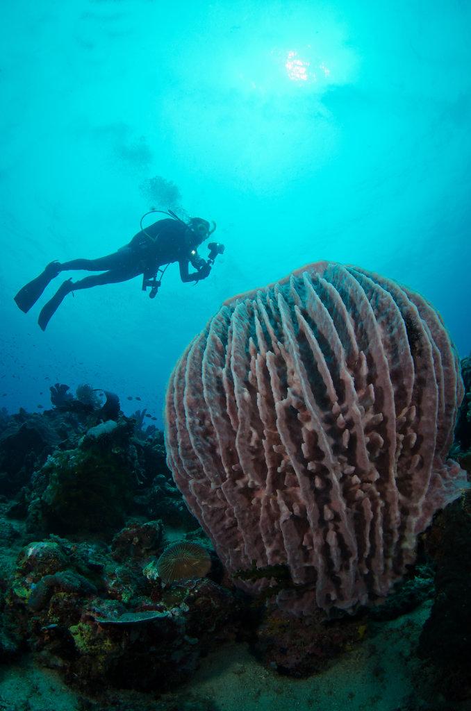 Giant Barrel Sponge & Diver