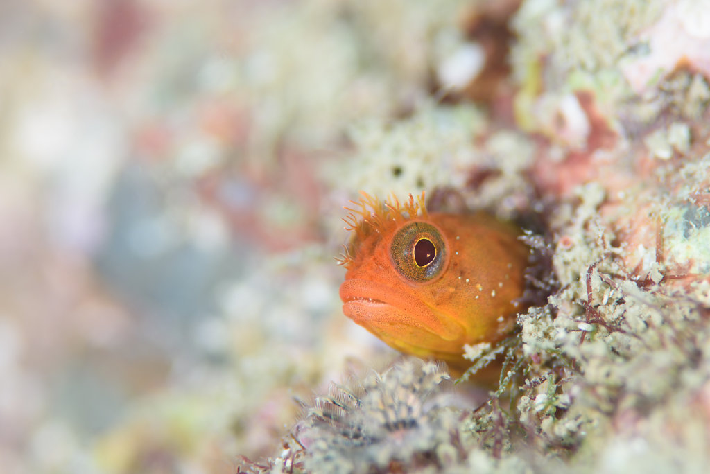 A Dive with Blennies 1