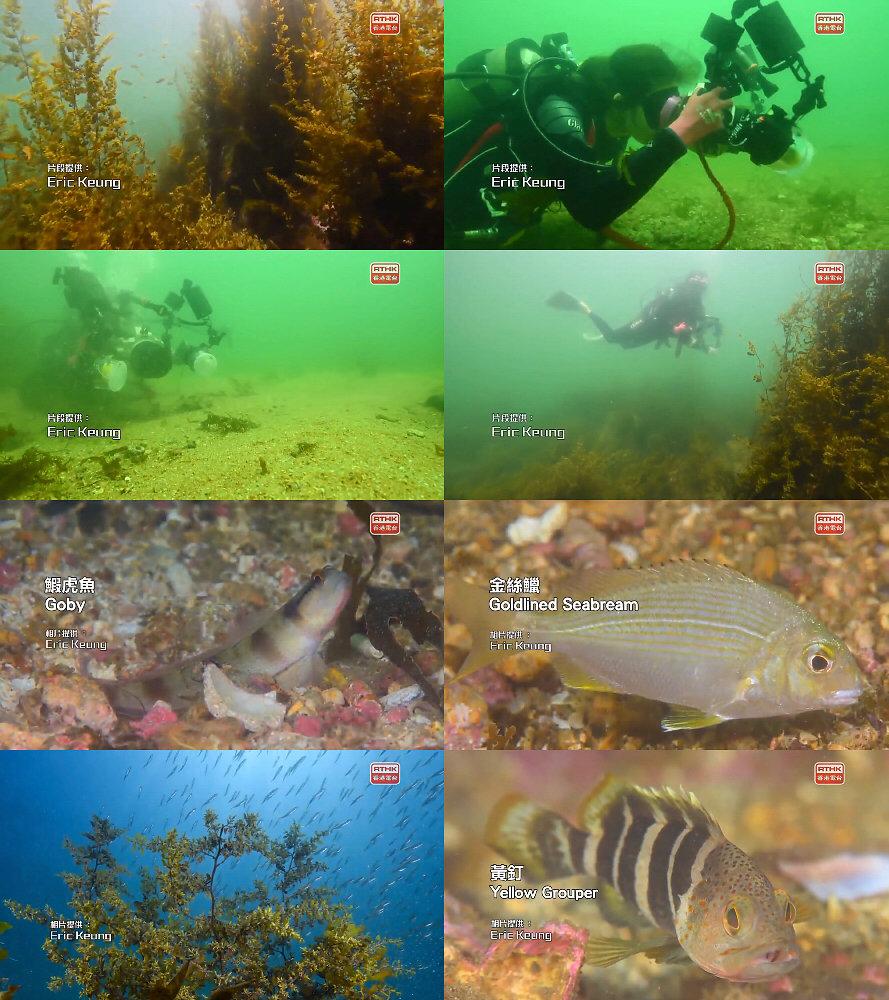 自在8點半(寵物2) 第十集:魚樂無窮