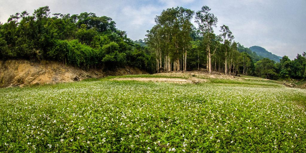 Secret Garden at Shing Mun Reservoir