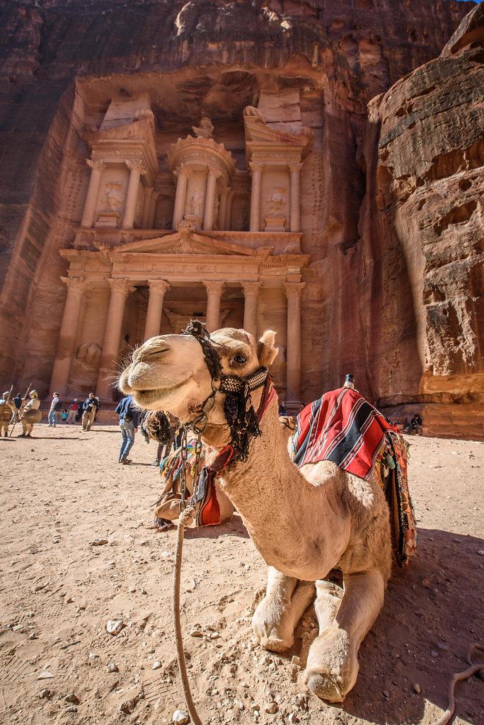 Camel and the Treasury
